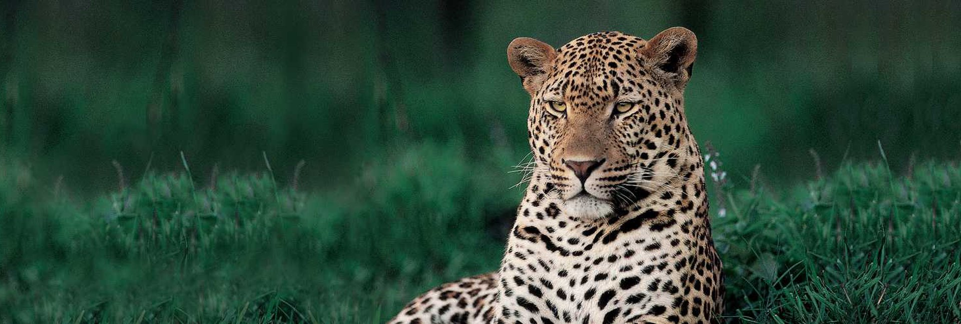 Leopards of Londolozi, Londolozi Luxury Game Reserve