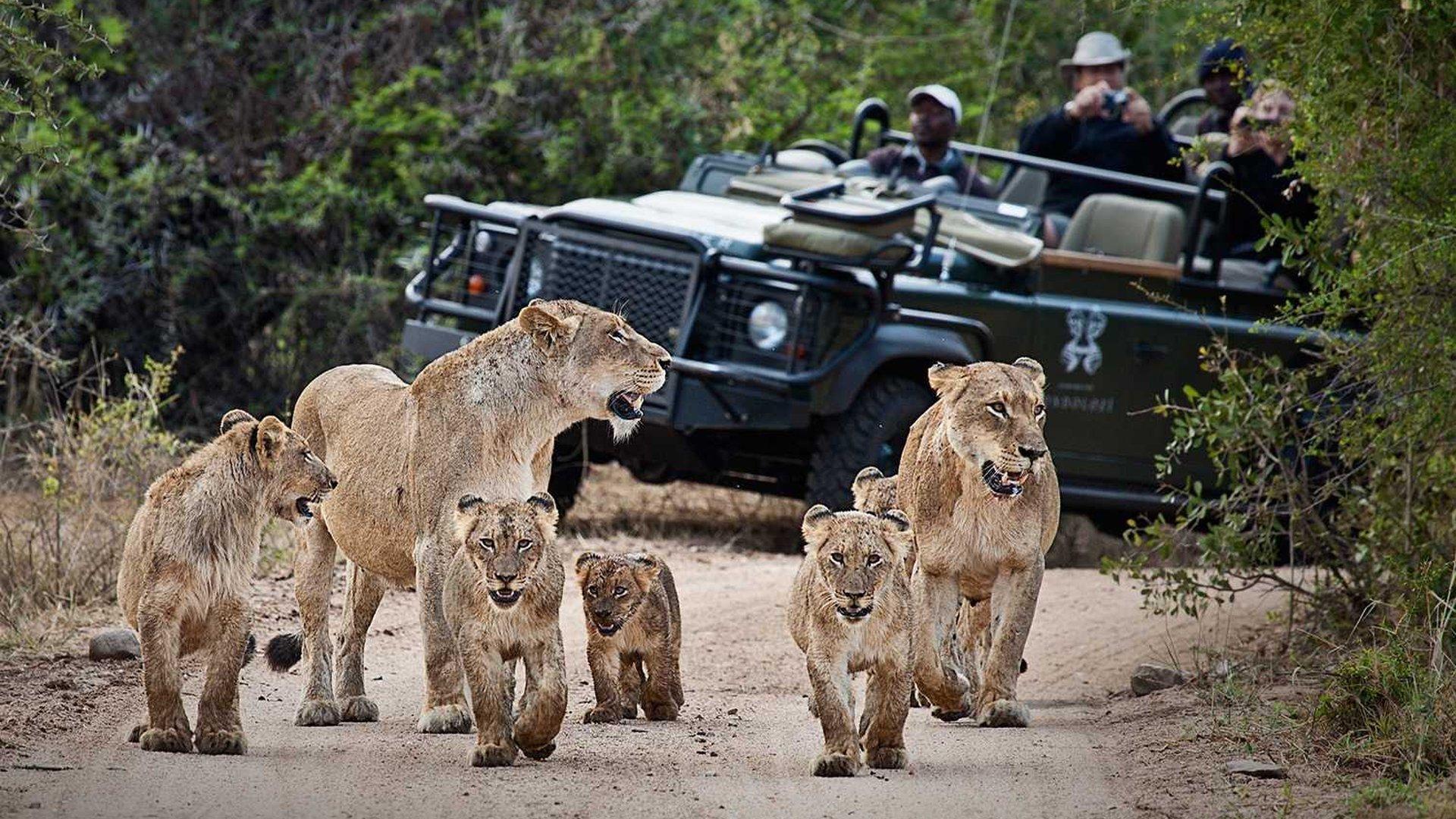 safari song download english