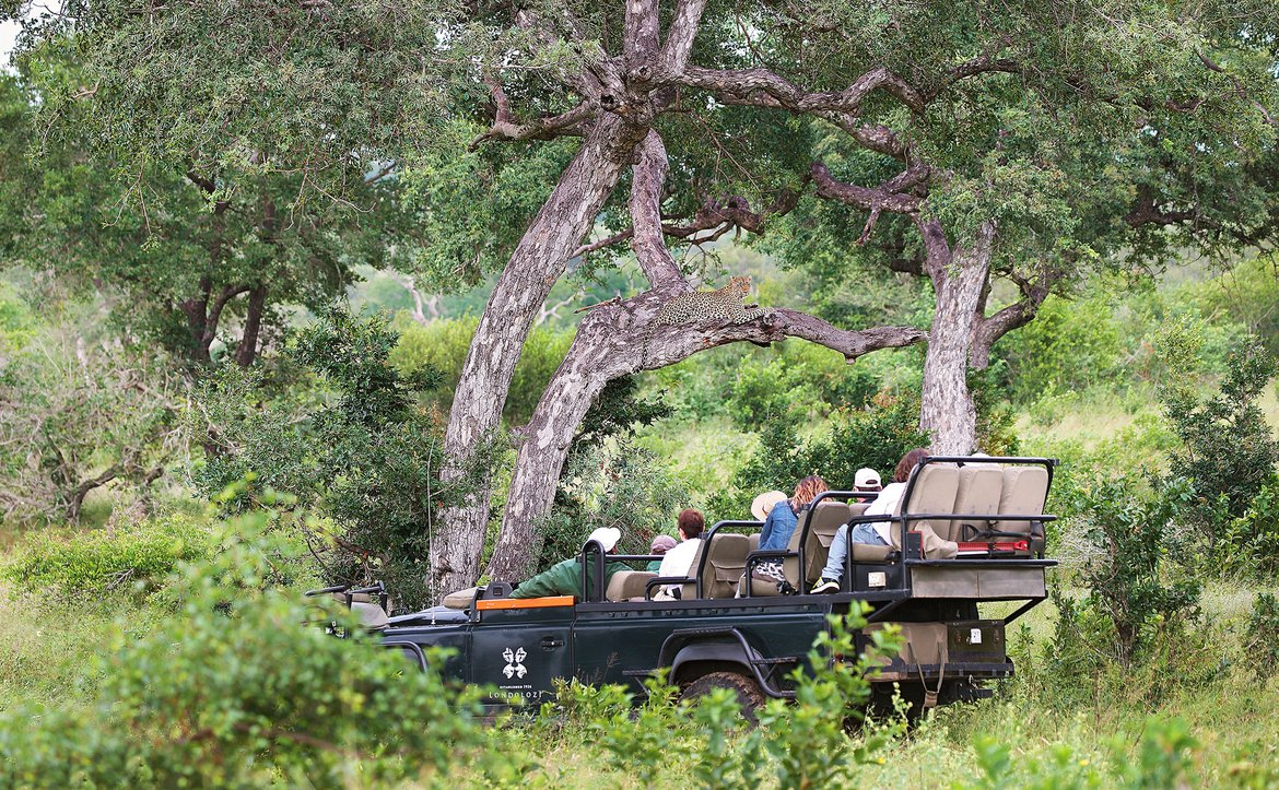 A game drive in a land rover at Londolozi through the bush
